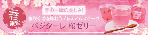 春限定 桜咲く春を味わうプレミアムスイーツ ベジターレ 桜ゼリー